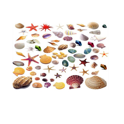 Poster d'aquarium <br/>Coquillages