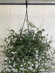 Bridal Veil Basket