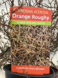 Coprosma Orange Roughy