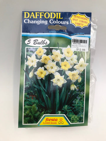 Daffodil Changing Colours