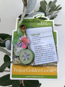 Feijoa Golden Goose