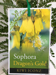 Sophora - Dragons Gold