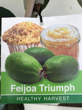 Load image into Gallery viewer, Feijoa Triumph