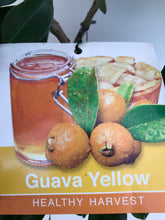 Load image into Gallery viewer, Guava - Yellow