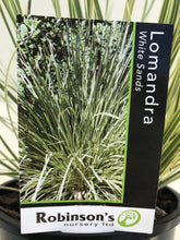 Load image into Gallery viewer, Lomandra White Sands PVR
