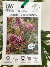 Load image into Gallery viewer, Grevillea Dorothy Gordon