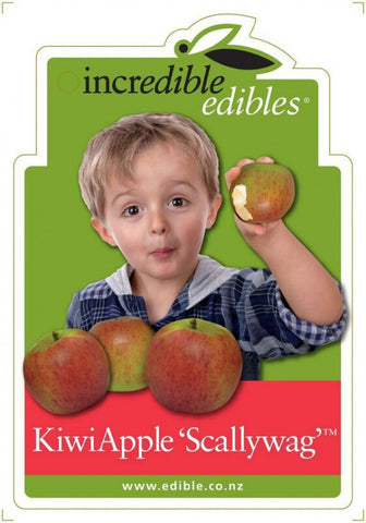 Apple Scallywag
