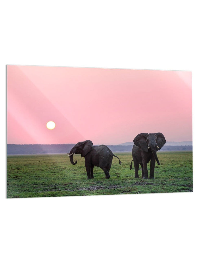 """Pink Elephant Skies"" - Glass Print - HYLUS Acrylic Glass Art - Skateboards, Surfboards & Glass Prints Wall Decor for your Home."
