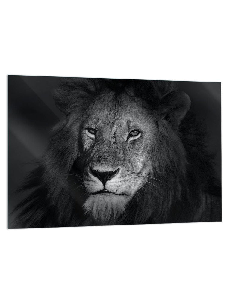 """Lion Eyes"" - Glass Print - HYLUS Acrylic Glass Art - Skateboards, Surfboards & Glass Prints Wall Decor for your Home."