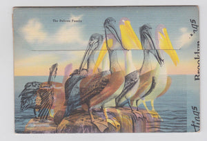 Florida Winter Vacationland 1940's Postcard Booklet 18 views