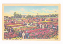 Load image into Gallery viewer, Nelis Tulip Farm Holland Michigan 1940's Linen Postcard Tulip Time