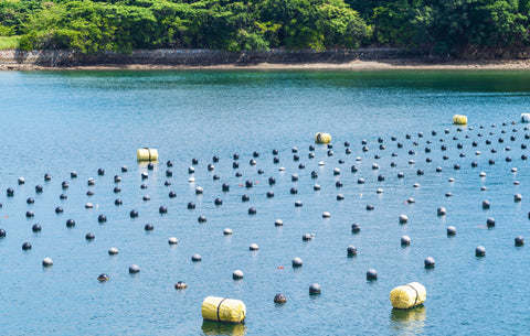 Pearl Farm in Shima Japan