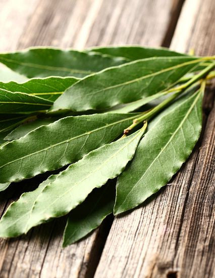 Essential Oil - Eucalyptus Globulous (Australia) 12 ml, 36 ml or 50 ml