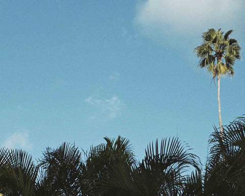 CHASING PALM TREES | SALTHEAD