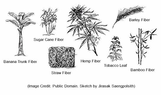 Alternative fiber pulp sources