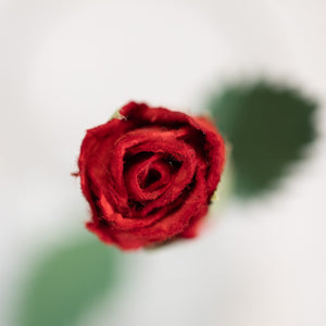 Single Red POOPOOPAPER Roses - Single Rose - Top View