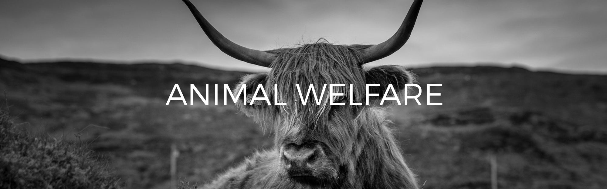Audio Architect Apparel Animal Welfare Policy