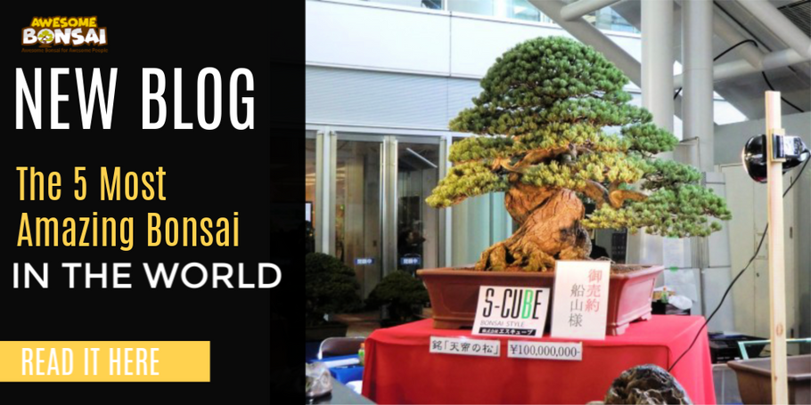 The Five Most Amazing Bonsai in the World