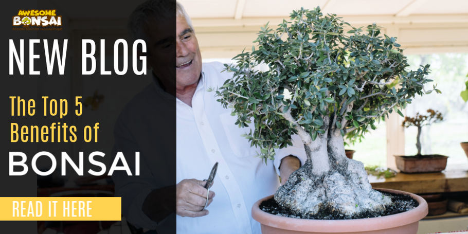 The Top 5 Benefits of Bonsai