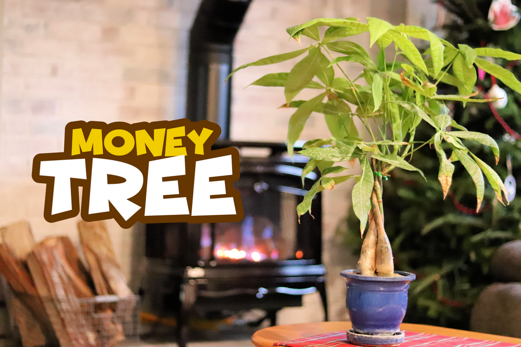 Money Tree w/FREE Shipping & Built In Humidity Tray