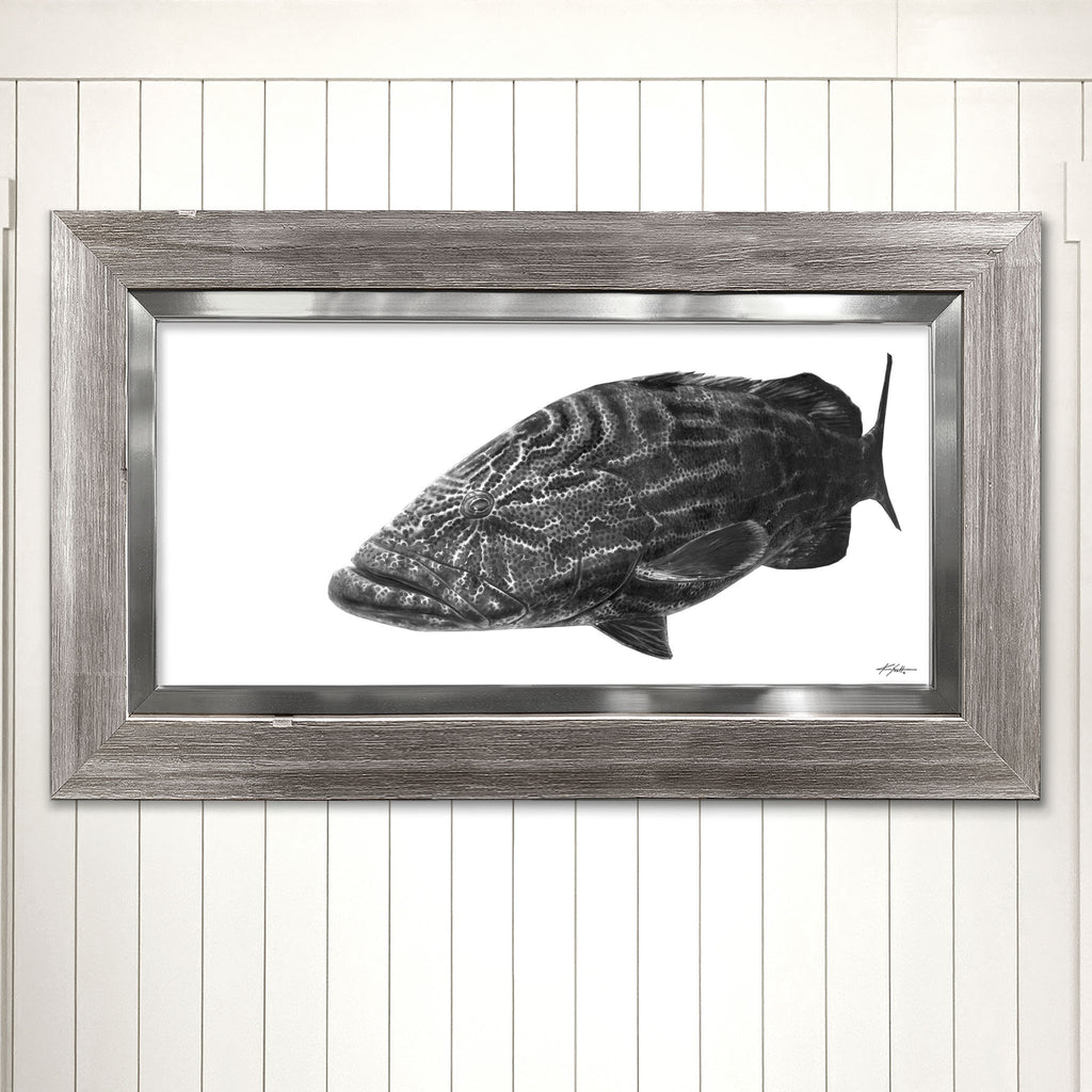 Black Grouper CC