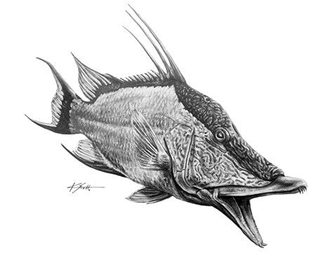 Hogfish Pencil