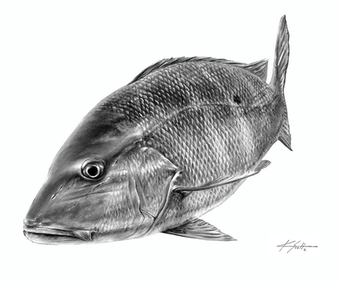 Mutton Snapper B/W