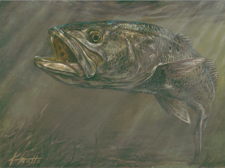 Spotted Sea Trout Framed Artwork