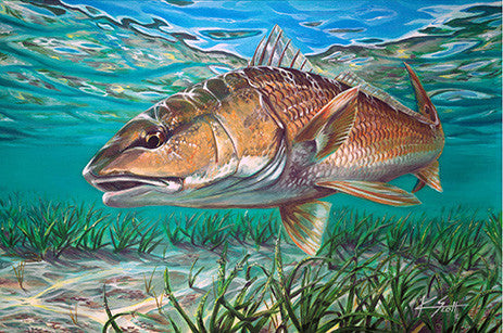 Redfish Hunt