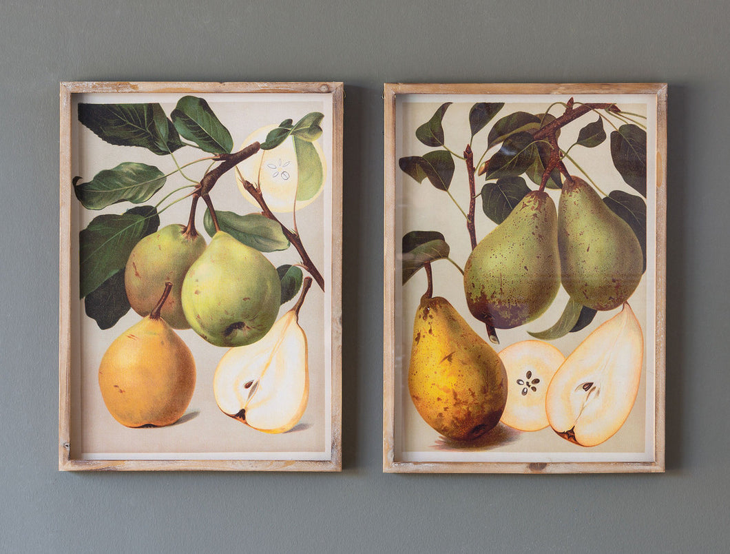 Bartlett Pear Botanical Prints