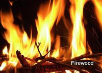 Firewood Fragrance Oil   .5 oz