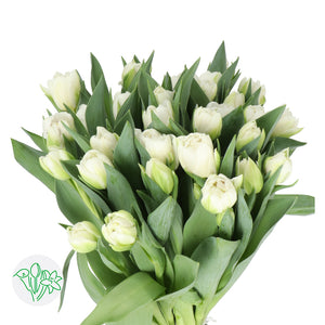 Int Women's Day 3/8 - Tulips (Pick your color)