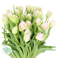 Load image into Gallery viewer, Int Women's Day 3/8 - Tulips (Pick your color)