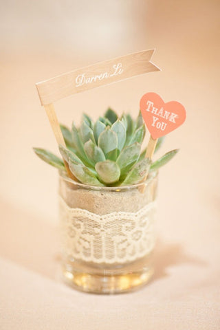 succulent wedding favors, succulent, succulent wedding favor, unique succulent wedding favor, top 10 unique wedding favors, unique wedding favors, wedding favors