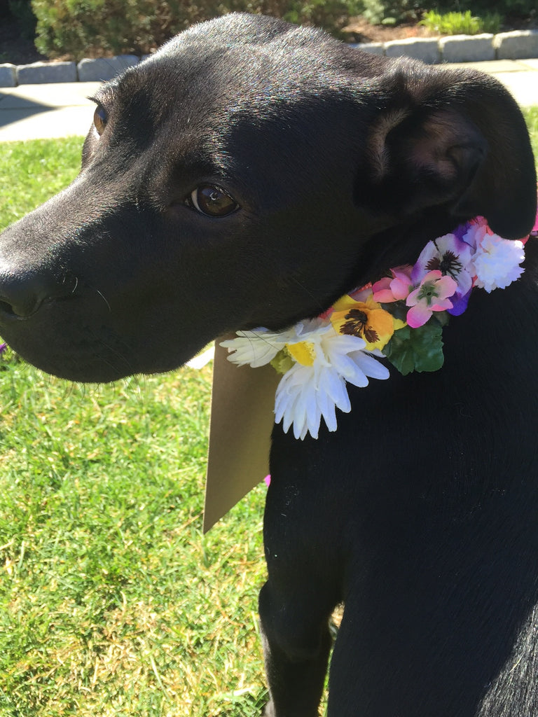 diy dog collar wedding flower collar