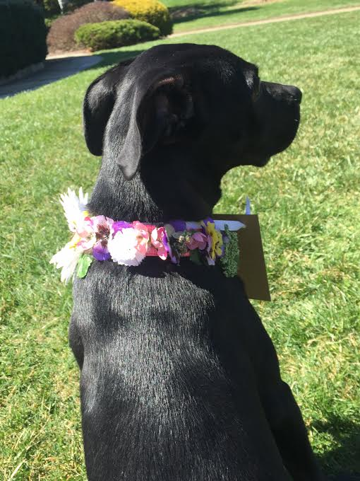 diy girl female dog collar dog collar for wedding