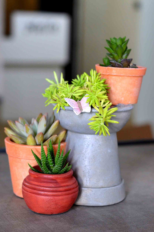 Resin Pots - Succulent Plants - My Star Gardens