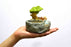 small pots succulent Plants return gift vastu collection tabletop pots resin pots my star gardens