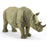Double Horn Young Rhinoceros ShowPieces - My Star Gardens