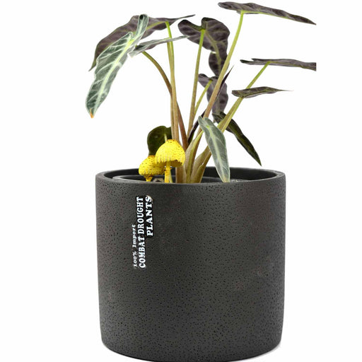 Money Plant Pots