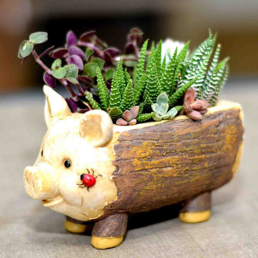 Cute Piggy Design Tabletop Resin Pot For Succulent Plants - My Star Gardens