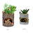Pots for Succulent Plants