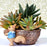 Best Decorative Pots