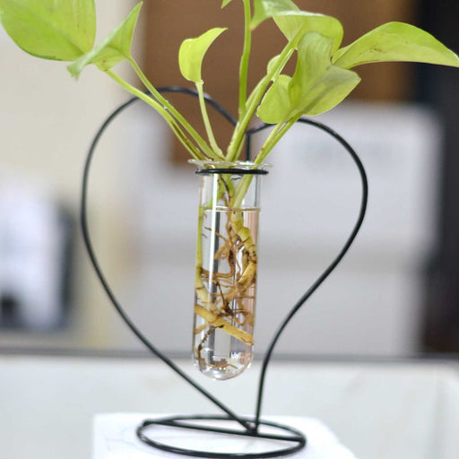 Heart Shape Terrariums with Metal Stand & Glass Tube - My Star Gardens