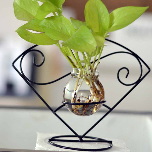 Arch Shape Terrariums with Metal Stand & Glass Tube - My Star Gardens