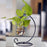 Hanging Terrariums with Metal Stand & Glass Tube - My Star Gardens