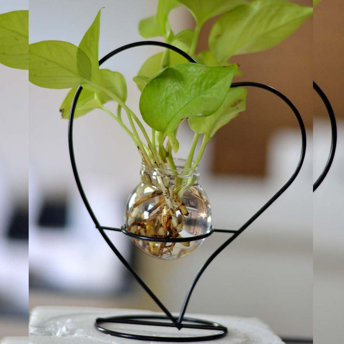 Heart Shape Terrariums with Metal Stand & Glass Bowl - My Star Gardens
