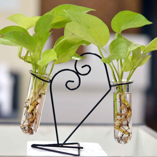 Hanger of Double Glass Tube Terrariums with Metal Stand & Glass Tube - My Star Gardens