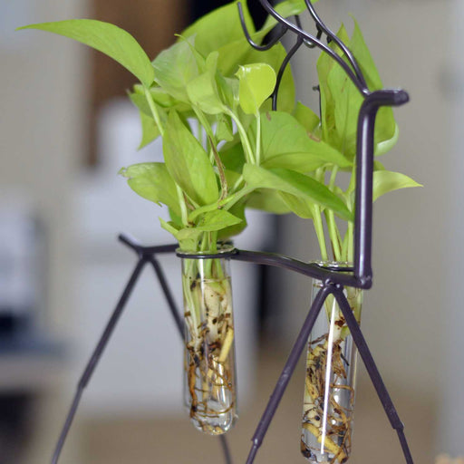 Deer Metal Stand With Two Glass Tube Terrariums Money Plant Planter - My Star Gardens
