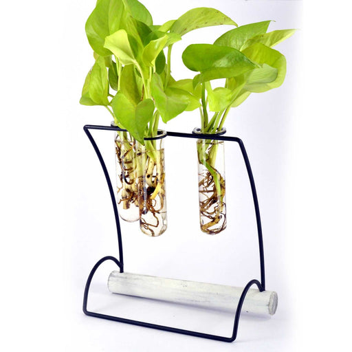 Hanger Metal Stand With Natural Wood base Two Glass Tube Terrariums - My Star Gardens
